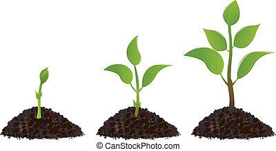 plants, зеленый, молодой