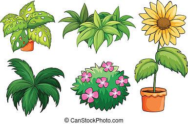 plants, flowerpots