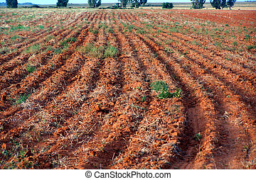 ploughed, field: