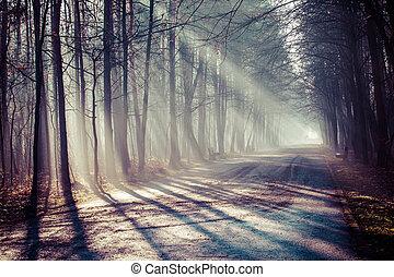 poland., туман, сильный, дорога, sunbeams, лес