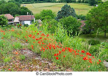 poppies, красный, франция
