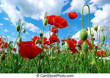 poppys, небо
