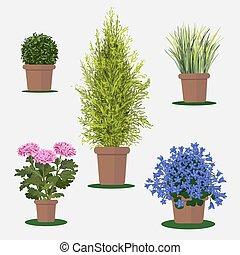 pot., цветы, иллюстрация