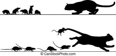 rats, chasing, кот