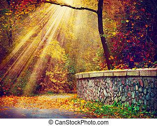rays, осенний, trees, осень, fall., park., солнечный лучик