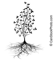 roots, вектор, дерево, молодой, задний план