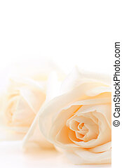 roses, бежевый, задний план