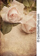 roses, белый