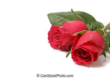roses, два, красный