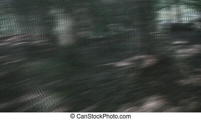 scene., лес, гнаться