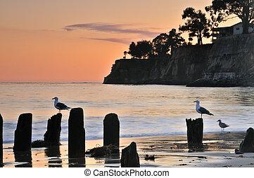 seagulls, закат солнца