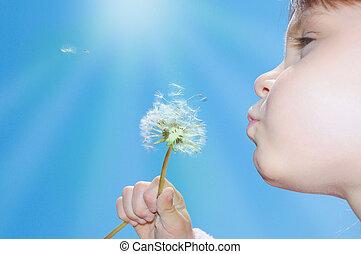 seeds, wishing, blowing, одуванчик