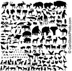 silhouettes, животное, коллекция