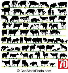 silhouettes, задавать, молочные продукты, крупный рогатый скот