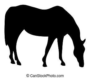 sillhouette, лошадь, grazing