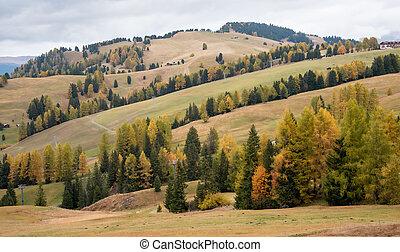 siusi, сосна, пейзаж, trees, красивая, ди, осень, долина, италия, зеленый, желтый, alpe