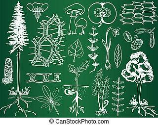 sketches, ботаника, биология, школа, -, растение, иллюстрация, доска