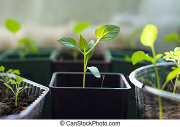 sprouts, зеленый