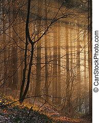 sunbeams, магия, лес