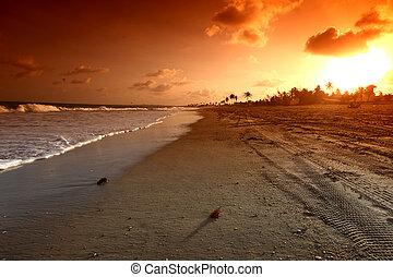 sunrice, океан