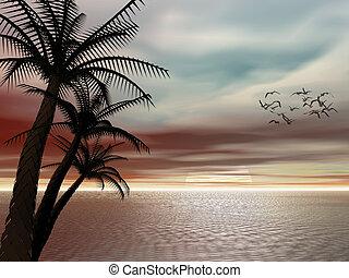 sunset., тропический