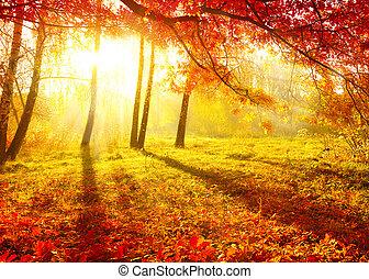 trees, падать, осень, осенний, leaves., park.