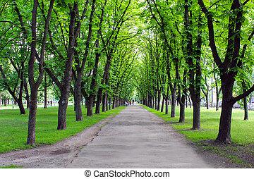 trees, парк, зеленый, многие, красивая