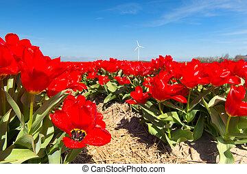 tulips, пейзаж, красный, голландский